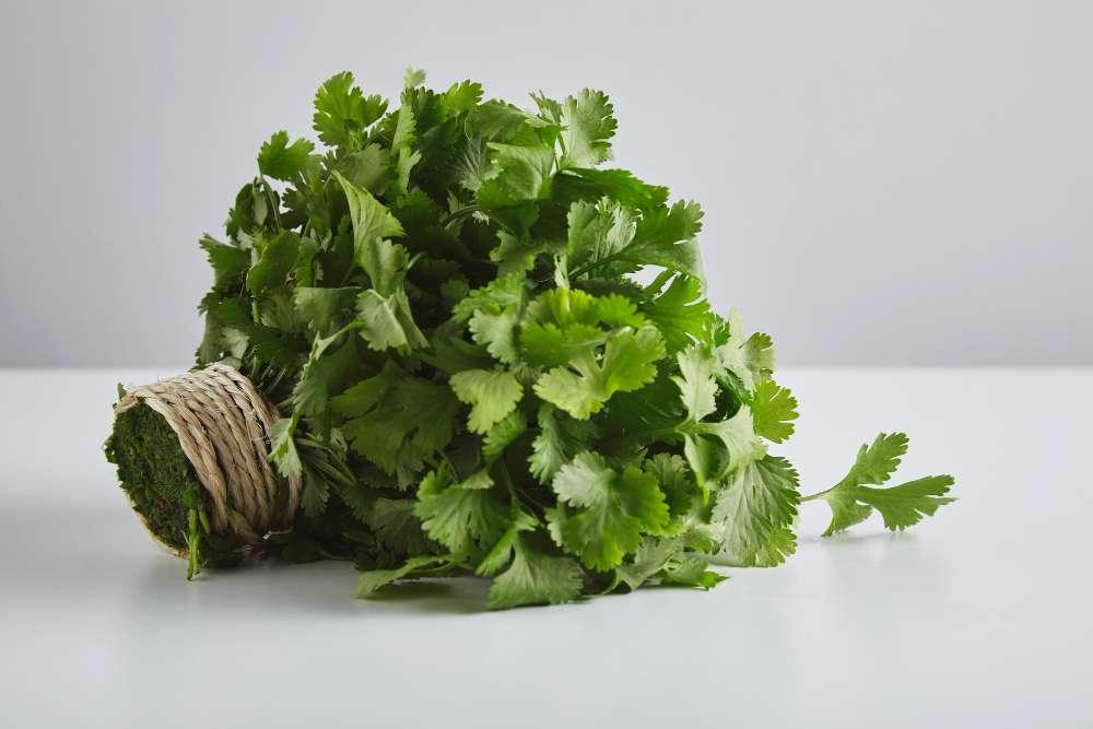 Miel de cilantro. Compra Online.
