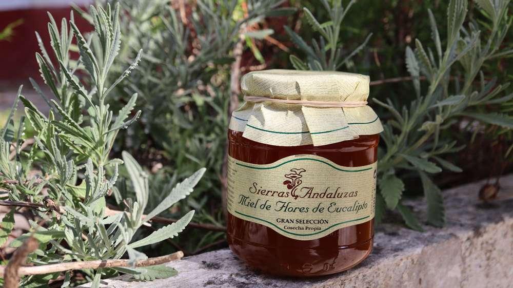 Compra Online Miel de Eucalipto pura hecha en España